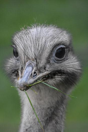 Close-up of ostrich