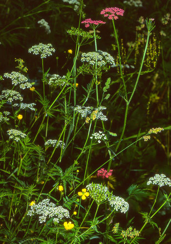 Field Flowers Green Color Beauty In Nature Flowers Fragility Growth Mountain Field Wildflowers