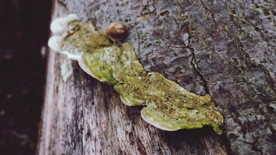 Close-up No People Day Nature Tree Textured  Wood - Material Tree Trunk Outdoors Beauty In Nature Fragility Macro_collection Macro Photography Macro Beauty Textured  Backgrounds Full Frame Flowers,Plants & Garden Fungi Fungi On A Log Fungi Detail Fungi Close Up Fungi Growing In Tree Trunk Mushroom Botanical