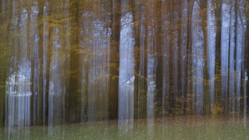 Am Stadtrand... Autumn Collection Day Experimental Photography EyeEm Nature Lover Forest Photography Nature No People Outdoors Autumn🍁🍁🍁 Philosophenwald Scenics Sonyalpha Tree EyeEm Best Shots - Nature EyeEm Deutschland