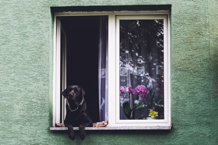 The dog at the window Animal Animal Head  Animal Themes Architecture Building Exterior Built Structure Canine Day Dog Domestic Domestic Animals House Mammal No People One Animal Outdoors Pets Plant Sitting Vertebrate Window