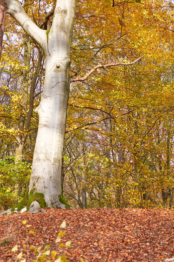 Sunlight falling on tree trunk during autumn