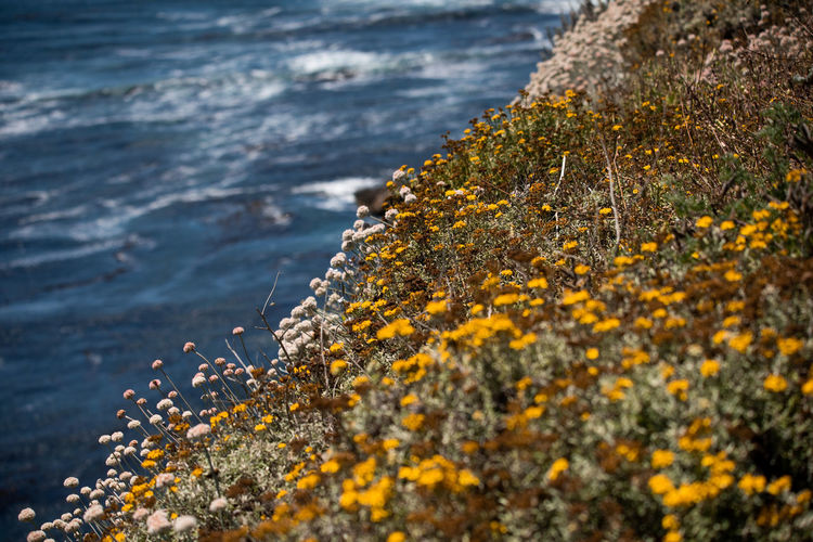 Scenic view of sea and yellow flowers on rock