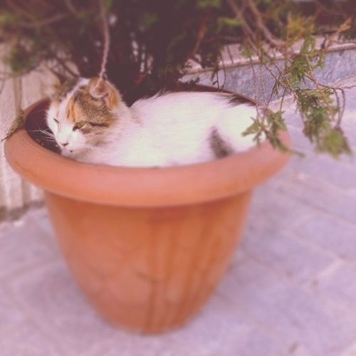 Cool Coolest  Coolo Catsofistanbul cat catinpot sleepwell