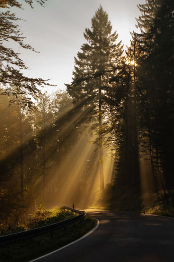 Tree Road Plant Direction Nature The Way Forward Beauty In Nature No People Forest Tranquility Country Road Sunlight Tranquil Scene Empty Road Outdoors Sunrays Sunbeam Sun Morning Sunrise Morning Light