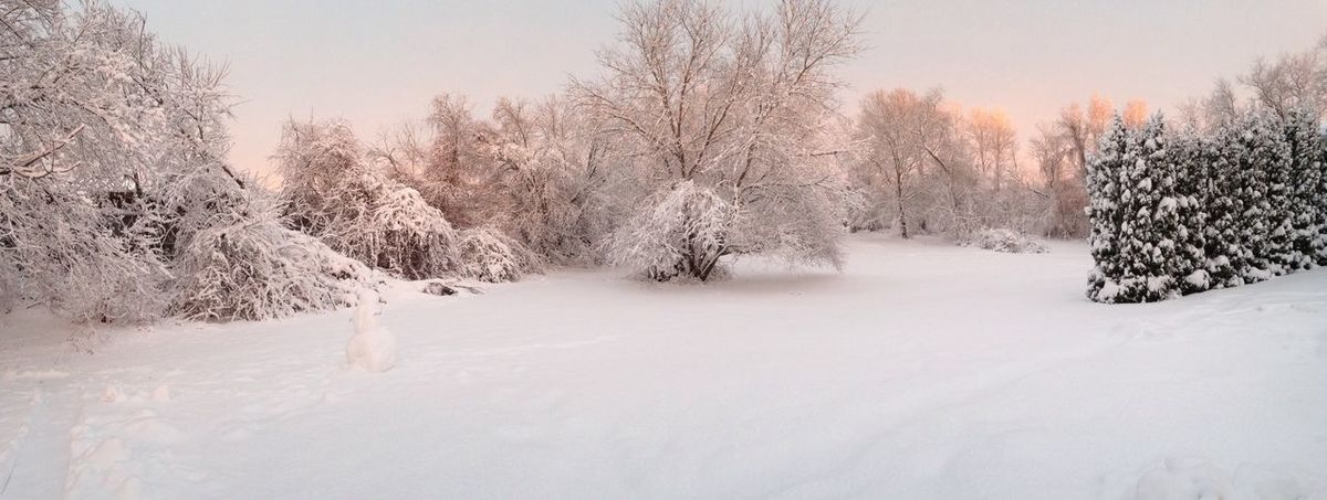 Scenes from my backyard Landscape_Collection Showcase: February Winter In New England Outside Photography February 2016 EyeEm Nature Lover Tree_collection  New England  Massachusetts Beautiful Nature Outside Huffingtonpost