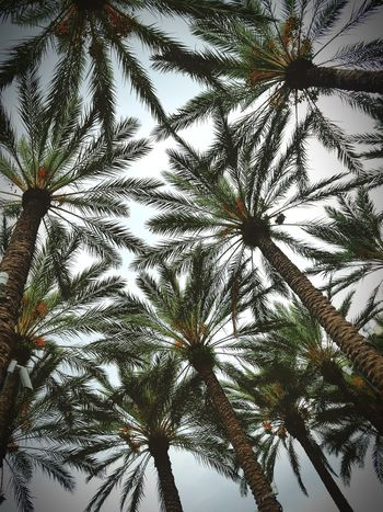 Under the palms. Tree Nature Growth Day Beauty In Nature Outdoors Clear Sky No People Palm Trees