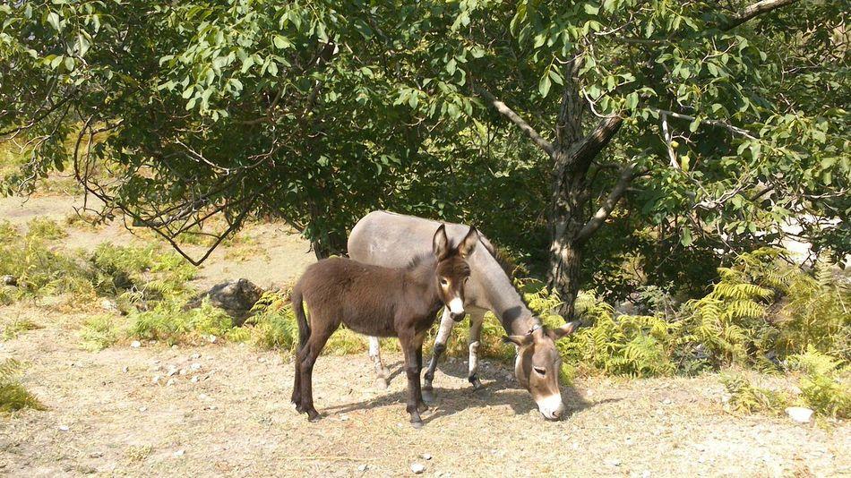Baby-donkey Albania Hello World 25 Days Of Summer Travel Photography I Love Albania Service Animals
