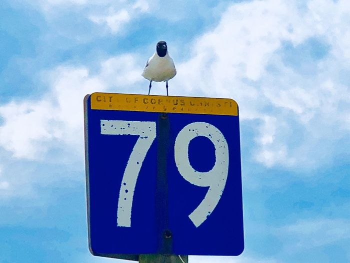 Low angle view of bird perching on sign against sky