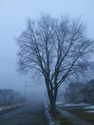 Bare trees along road