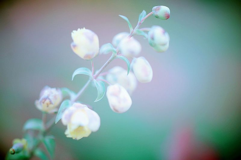 Spring Time Spring Colours 春 Spring EyeEm Nature Lover Colors 山野草 Hazy  Airy