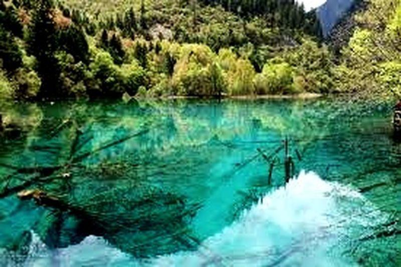 danau framu Tree Water Reflection First Eyeem Photo