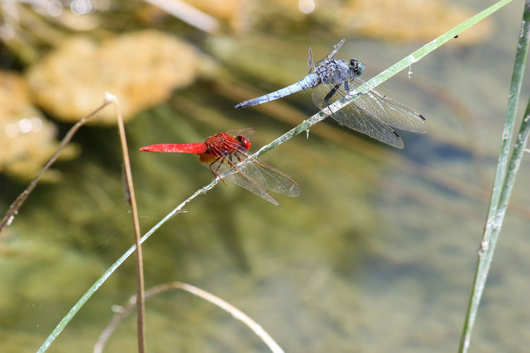 Close-up of dragonfly on twig