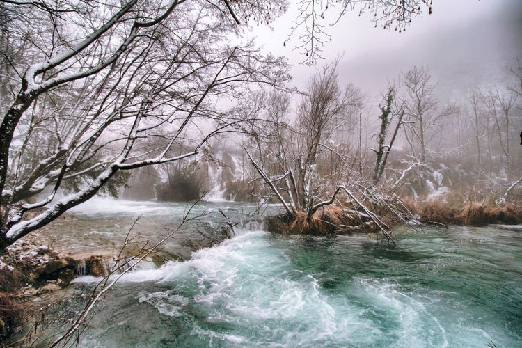 Bare trees by river during winter