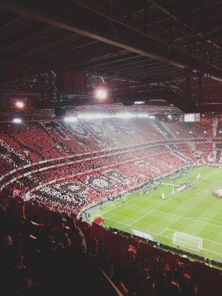 Football Fever Football Football Fans Soccer Fans Footballfan Soccer Benfica Champions Benficasempre Winner Campeao