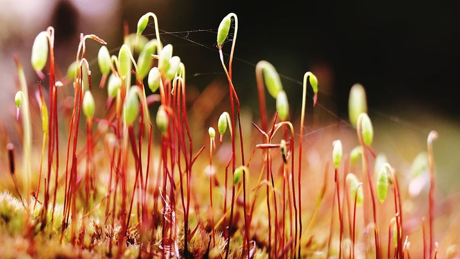 Little wood Beauty In Nature Nature Photography Plants 🌱 Fragility New Life Botany Focus On Foreground Outdoors Photography