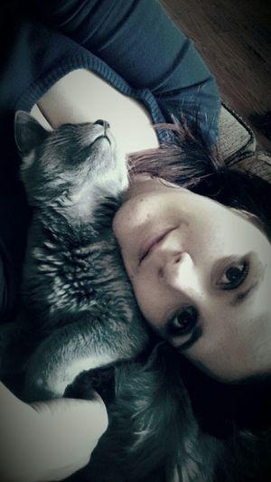 Renaeroars Kitty Cat Napping