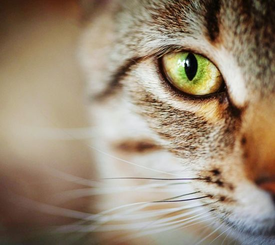Nature Cat♡ Cat Lovers My Kitty 😍 Love Cats❤ My Love❤ Cats 🐱 🐈 🐱 Domestic Cat Portrait Looking At Camera Animal Head Feline Close-up Cats Of EyeEm Close-up Animal Themes Domestic Animals Animal Eye No People Day