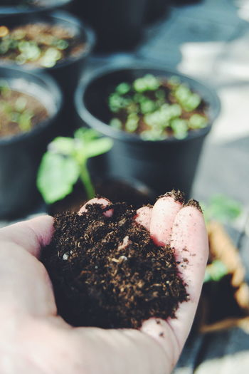 Planting seeds Close-up Flower Food Food And Drink Freshness Fruit Growing Growth Healthy Eating Healthy Lifestyle Indulgence Leaf Organic Plant Potted Plant Preparation  Red Selective Focus Stem Temptation Working Hands Soil Seeds Seeds Of Life Planting