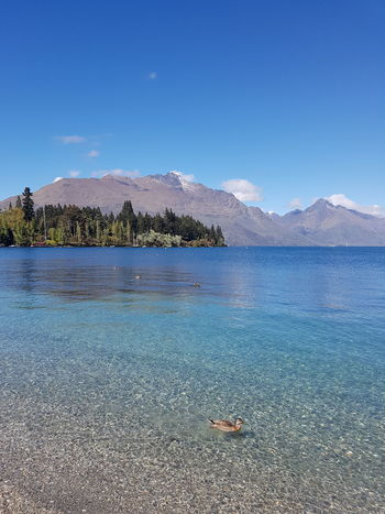 Blue Sky Perfection Clearwater Duck Mountain Range Beautiful Queenstown New Zealand Summer Exploratorium