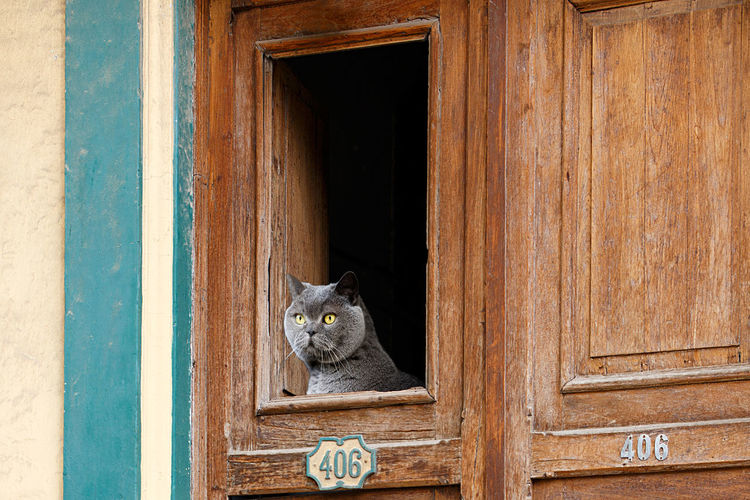 Portrait of a cat on wooden door