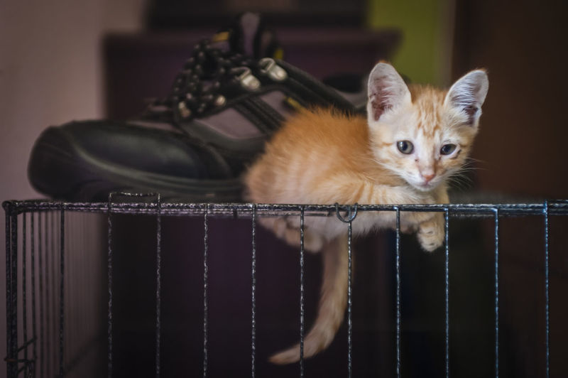 Portrait of cute kitten relaxing by shoe on cage at home