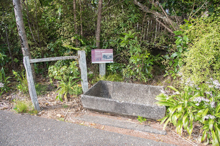 Auckland, New Zealand - December 17,2016: Historic horse trough and hitching post on trail by the Arataki Centre in the Waitakere Ranges in Auckland, New Zealand Auckland Old-fashioned Waitakere Ranges Absence Arataki Centre Archival Artifact Communication Empty Forest History Hitching Post Horse Trough Leaf Nature New Zealand Old Outdoors Plant Sign Text The Past Tree Trough Wood - Material