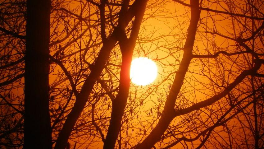 Beauty In Nature Nature No People Wschód Słońca Sunrise Tree Sun Eyeemphotography No Retouch Bez Retuszu EyeEm EyeEm Best Shots Kodak Easyshare Podkarpacie Poland Polska Kodak Trees And Sky
