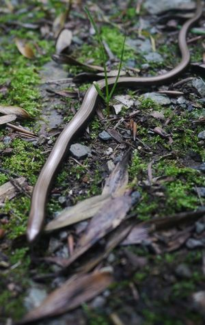 Lizard Nature Micro Four Thirds blind worm Change Your Perspective
