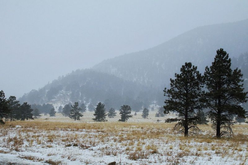 Traveling Home For The Holidays Tree Nature Tranquility Beauty In Nature Landscape Tranquil Scene Scenics Clear Sky Mountain No People Cold Temperature Outdoors Day Snow Winter Sky 12daysofeyeem Canon Canonphotography Colorado Road Trip Been There.