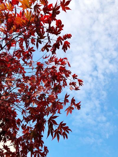 Sky Tree Plant Low Angle View Branch Nature No People Outdoors Flowering Plant Autumn Beauty In Nature Red
