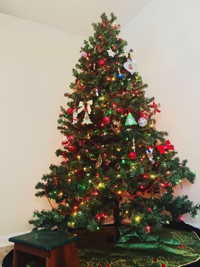 Trees up. Lights bright. Check This Out Taking Photos Holiday Christmas Tree Christmastime