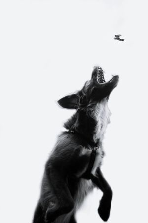 Fine Art Photography Animal Enjoying Life Fine Art Light And Shadow Dog Beautiful Dog Play Take Take It