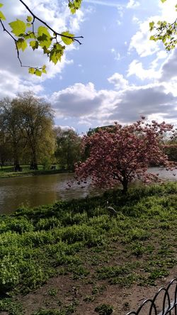 Water Tree Cloud - Sky Sky Nature Growth Outdoors No People Day Beauty In Nature Freshness Travel Destinations Tourism Vacations London Lifestyle Easter Sunday Holiday Multi Colored River Nature Hyde Park London Walking Around Nature Hydeparklondon Buckingam Palace
