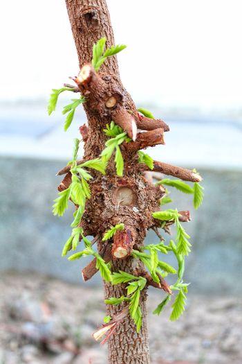 Tree Tree Sea