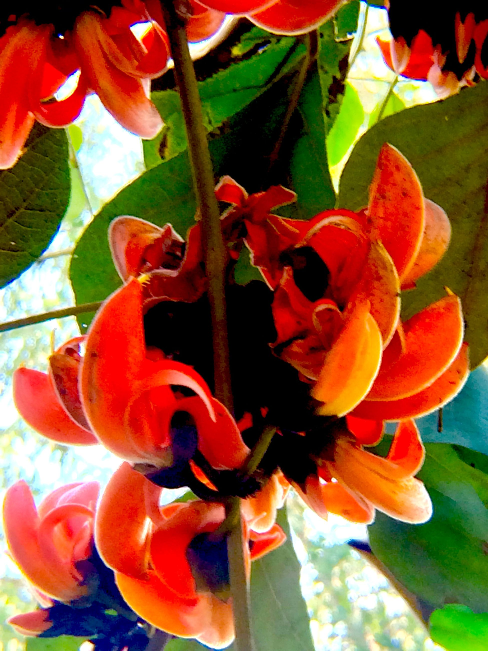 flower, petal, freshness, flower head, growth, fragility, orange color, beauty in nature, red, plant, blooming, close-up, nature, pollen, stamen, in bloom, focus on foreground, leaf, no people, day
