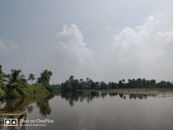 The Backwaters Tree Water Lake Swimming Reflection Palm Tree Alligator Sky Cloud - Sky Landscape