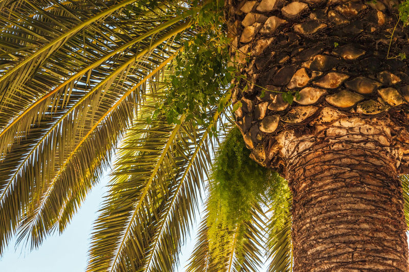 Palm tree Barcelona SPAIN Design EyeEm Best Shots Travel Travel Destinations Coast Summer Colorful Tree Palm Tree Tree Trunk Sky Close-up Green Color Palm Leaf Palm Frond Tropical Tree Coconut Palm Tree Date Tropical Climate Coconut Caribbean Date Palm Tree My Best Photo