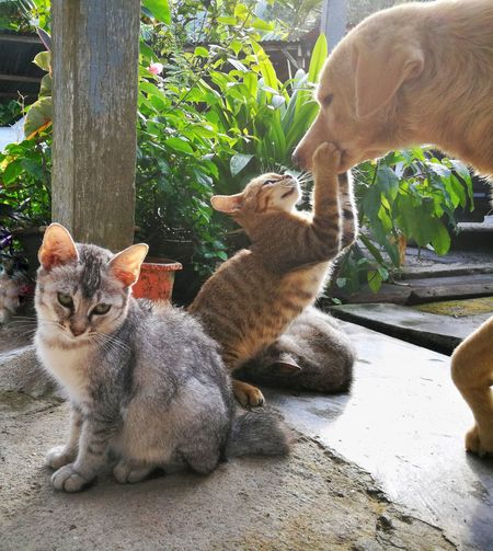 Pets Animal Themes Domestic Animal Domestic Animals Mammal Cat Group Of Animals Domestic Cat Feline Vertebrate Two Animals Day No People Nature Sunlight Plant Sitting Whisker Animal Family