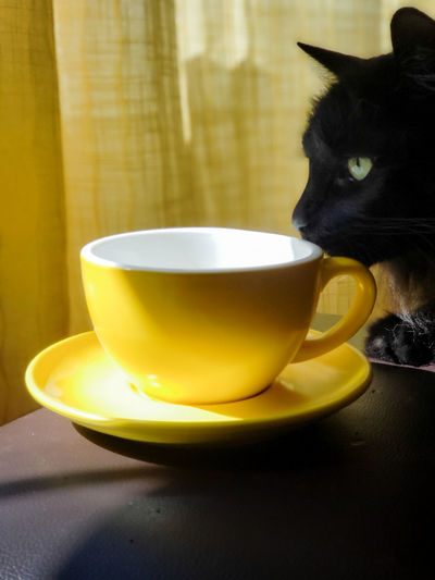 Apparently cats like coffee too 😊 Cat Cats No People Pets Drink Yellow Table Saucer Close-up Food And Drink Coffee Cappuccino Latte