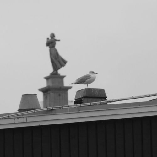Sea men wife Bird Office Building Statue Sculpture Human Representation Female Likeness