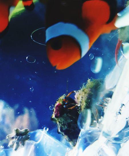 Nemo in the bag with Sebastian :-) Clownfish Seafish