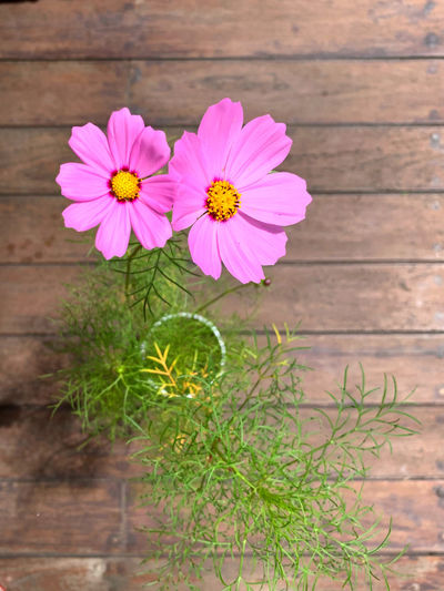 Close-up of pink flower on wood