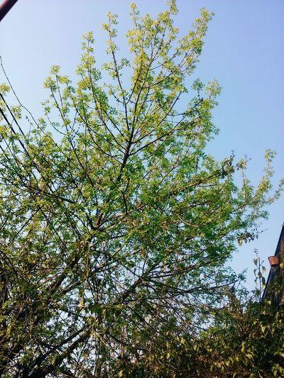 GREEN LIFE Tree