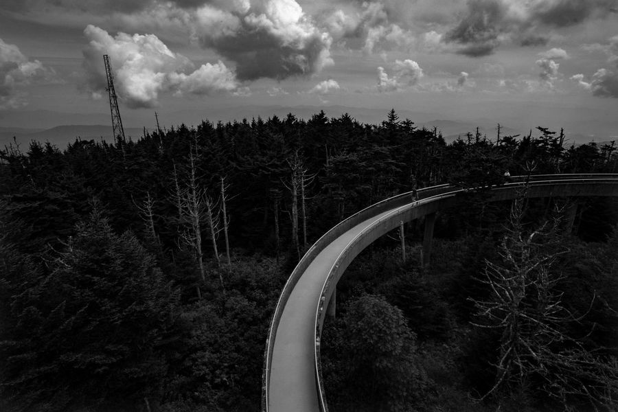 Elevated walkway in black and white Blackandwhite B&w Mystery Summer Exploration Fine Art Clingmans Dome Great Smoky Mountains  North Carolina Appalachian Elevated Walkway Built Structure Man Made Structure Forest