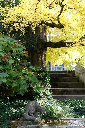 Stoney fox in old botanical garden. yellow tree leaves. Alley Tree Alley Stairs_collection Staircase Stone - Object Stoney Fox Plant Tree Architecture Growth No People Nature Day Staircase Representation Outdoors Sunlight Built Structure Leaf Sculpture Branch Park Green Color Statue Plant Part Solid
