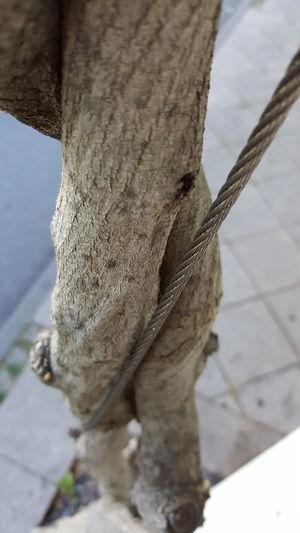 Street Nature Straße Natur Weg Entdecken Green Trees Pflanzen Plant Human Vs Nature Wood-material