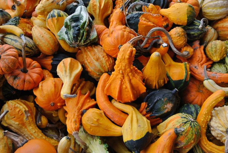 A horde of gourds Food And Drink Food Healthy Eating Backgrounds Freshness Full Frame Wellbeing Orange Color Pumpkin High Angle View Large Group Of Objects Market Abundance For Sale Market Stall No People Vegetable Day Retail  Squash - Vegetable