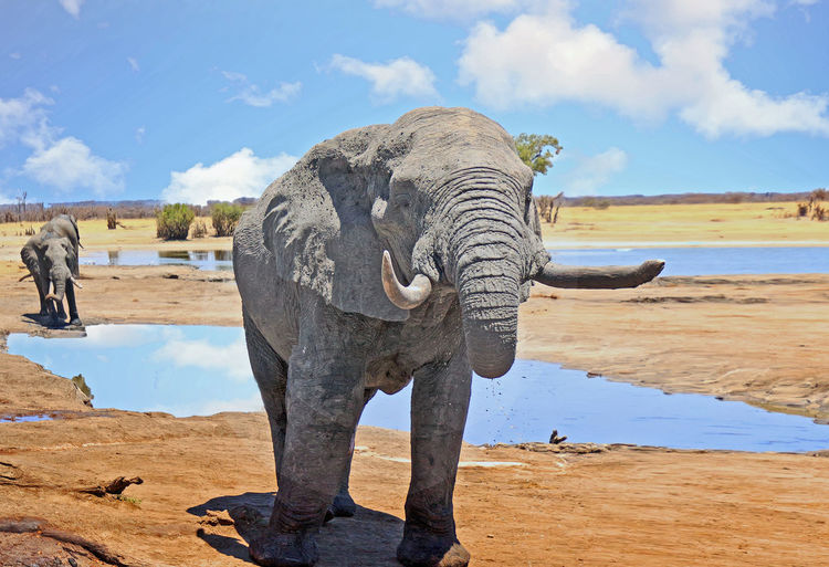 Sky Animal Water Animal Themes Elephant Mammal Nature Cloud - Sky One Animal Standing Animal Wildlife Beauty In Nature Sunlight Outdoors Wildlife & Nature Hwange National Park Animals In The Wild