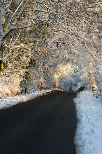 A cleared country lane passes though a snow covered winter overhanging tree tunnel at sunset. Asphalt Beauty In Nature Clear Cleared Country Lane Day Journey Nature No People Outdoors Overhanging Overhanging Trees Snow Snow Covered Snow Tunnel Track Tree Tunnel Water